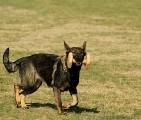 Všestranný pes Zbraslavi 2018 – foto poslušnost