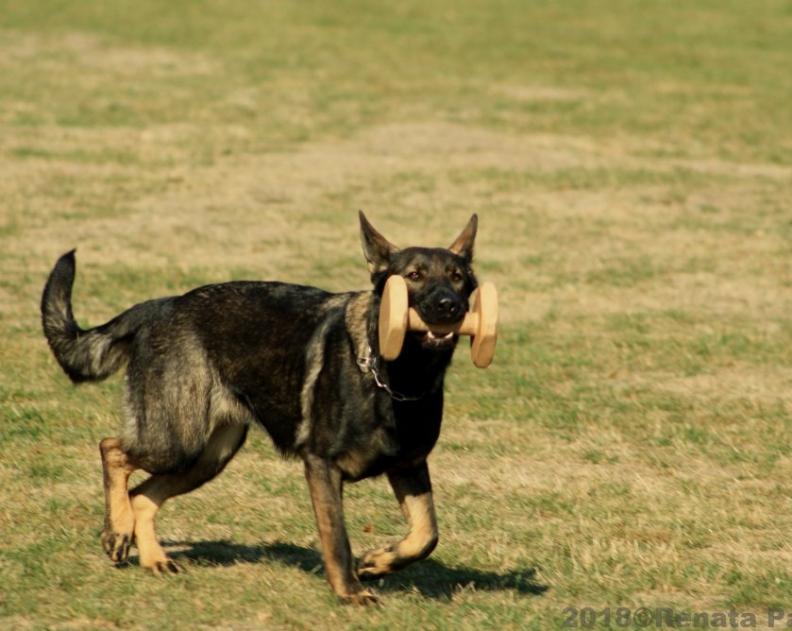 Všestranný pes Zbraslavi 2019 – fotogalerie
