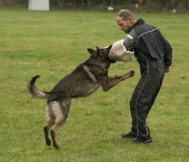 Všestranný pes Zbraslavi 2020 – fotogalerie