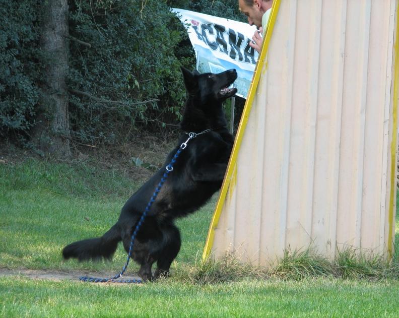 Řád ochrany zvířat při zkouškách a svodech psů